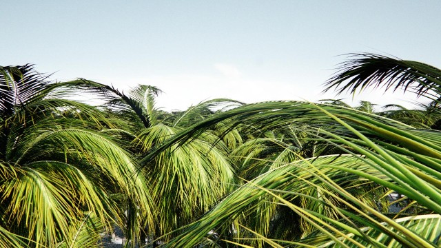 test_0002_palmtrees_n.jpg