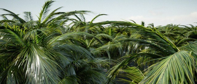 test_0012_palmtrees.jpg